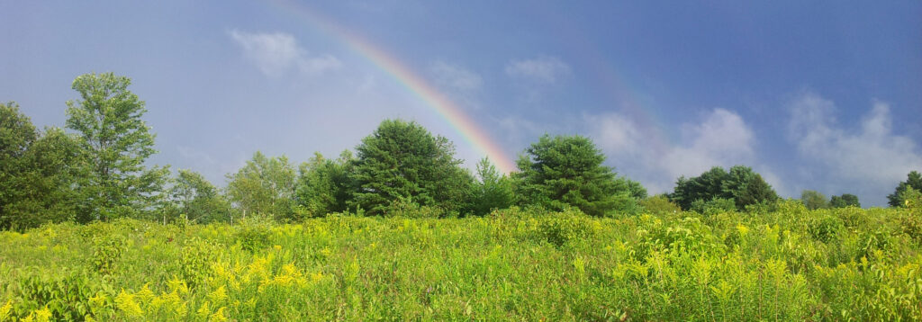 Rainbow_Header
