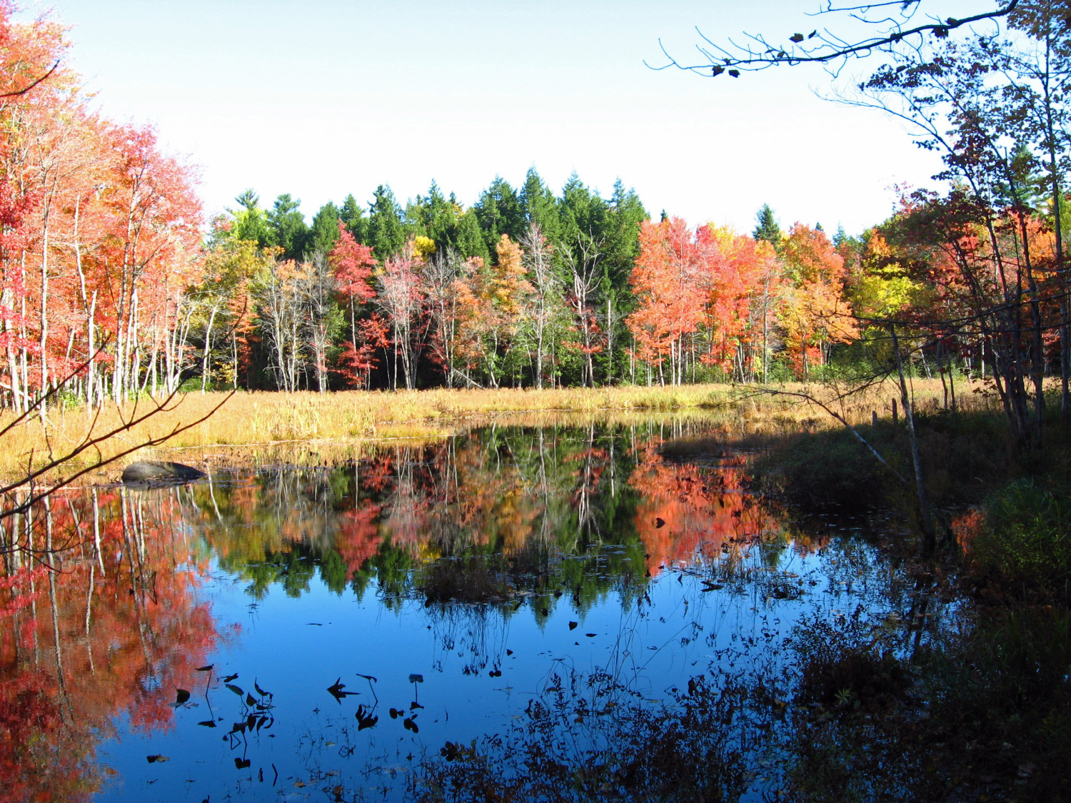 Fall_Colors_on_Marsh_Island