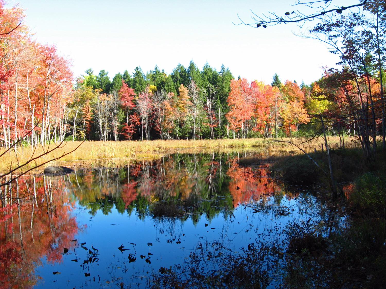 Fall_Colors_on_Marsh_Island